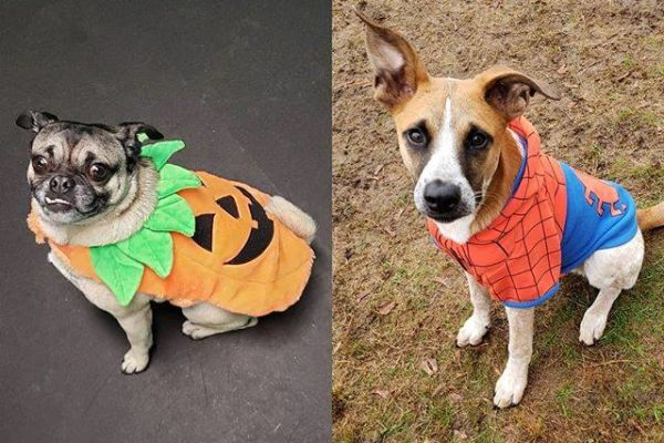 Puppy Paradis, Dog Daycare Salem NH Halloween Costume Contest